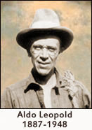 aldo leopald essay Aldo leopold was a renowned american ecologist, environmentalist and scientist this biography of aldo leopold provides information about his childhood, life, works.